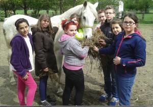 Hof pferde
